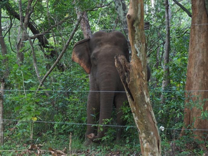 道路の向こうの野生ゾウ