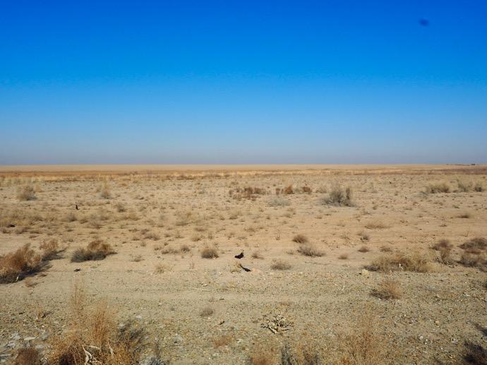ウズベキスタンの砂漠