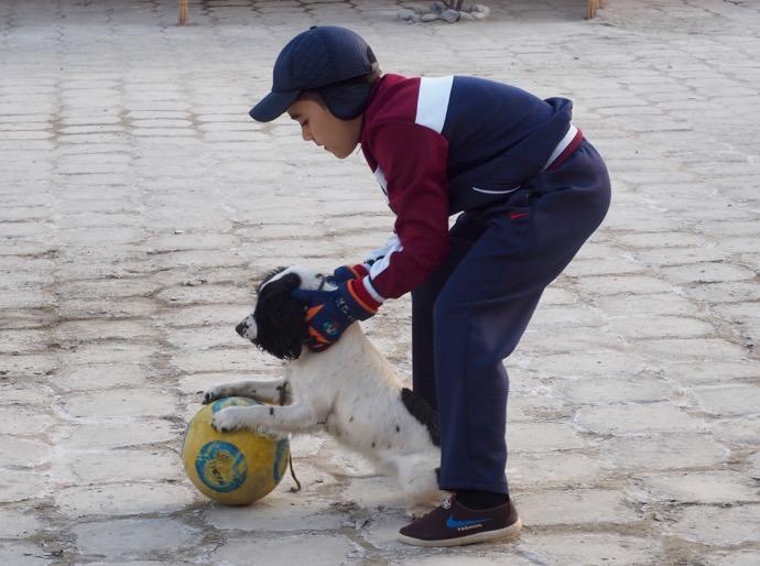 サッカーを楽しむ犬と少年