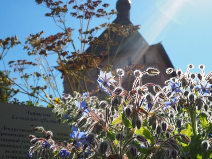 スパソ・エフフィミエフ修道院のお花