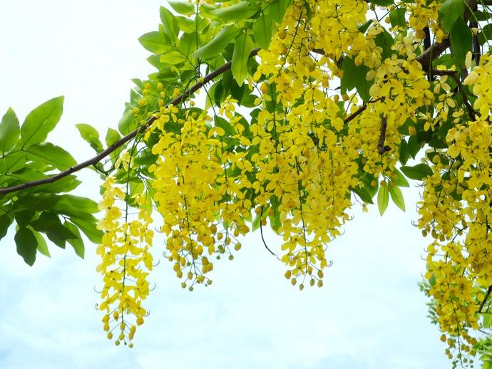 咲き乱れる黄色い花