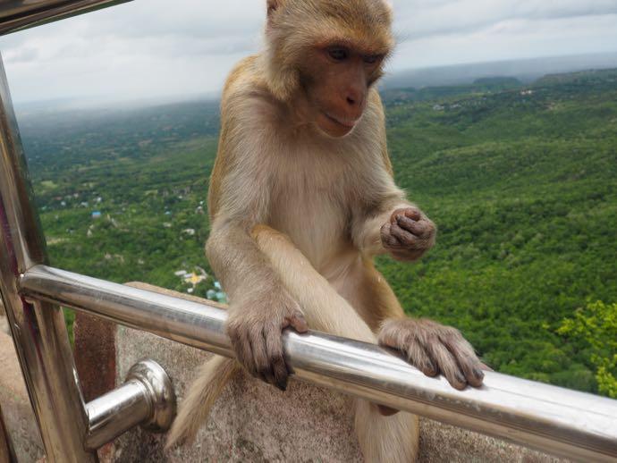 手すりに陣取る猿