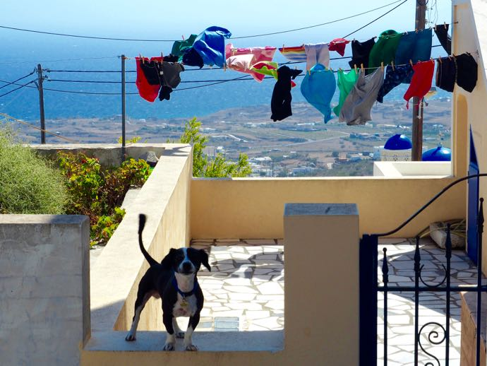 洗濯物と番犬