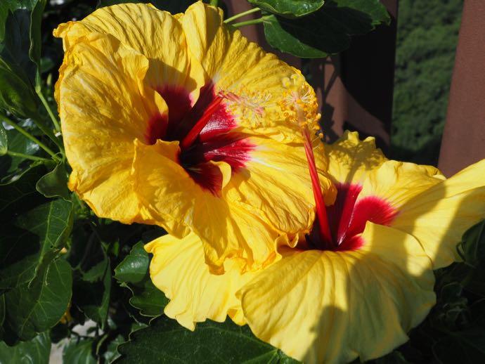 植木鉢に咲いた黄色い花