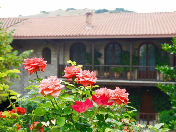 メテオラ アギオス・ステファノス修道院に咲く可愛い花
