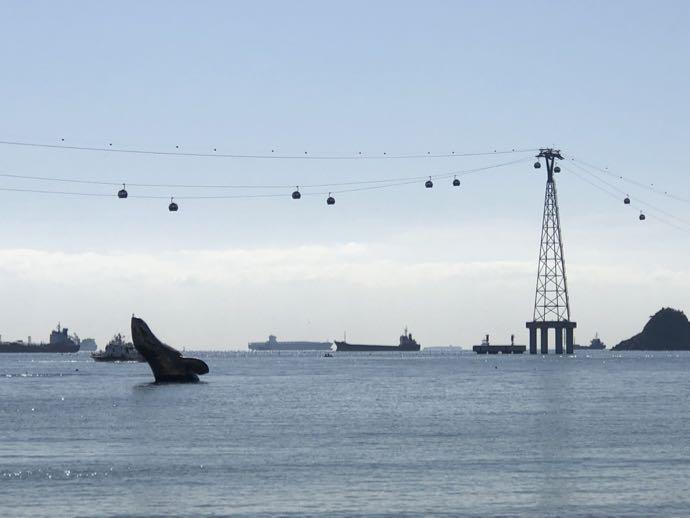 松島海上ケーブルカーとクジラのしっぽ