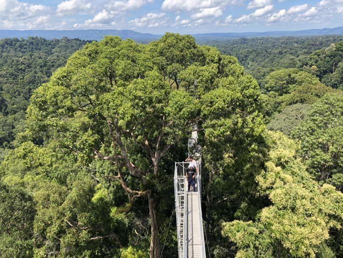 トゥンブロン国立公園のキャノピーウォーク
