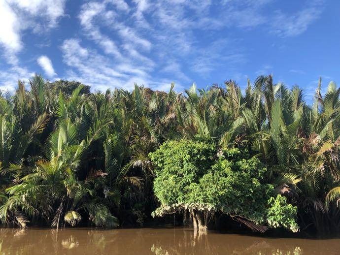 熱帯の植物らしい光景