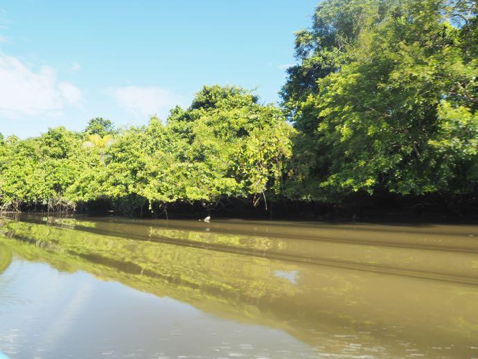 マングローブの森を進む