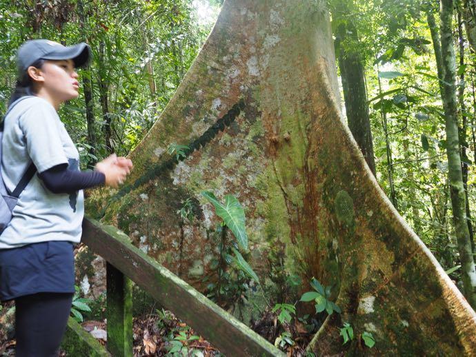 南国の樹木