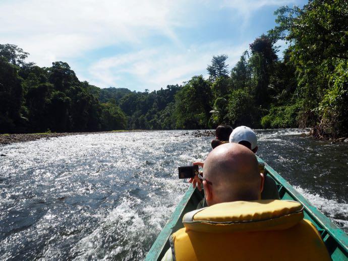 ボートはマングローブの森を疾走