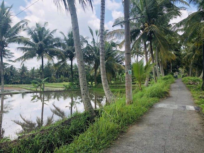 楽園の散歩道