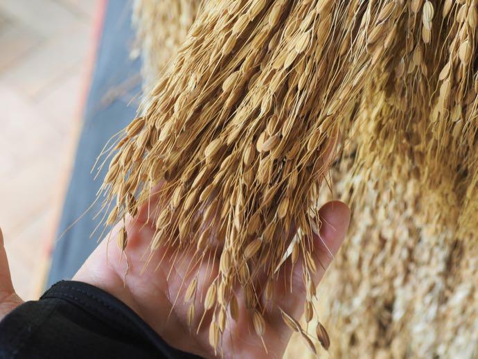 バロンの毛の代わりの稲穂