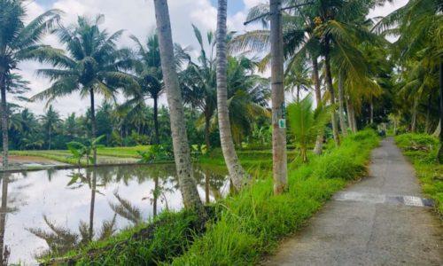 ウブド楽園の散歩道