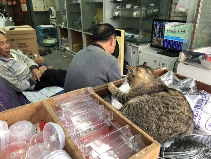 店主とテレビを見る猫