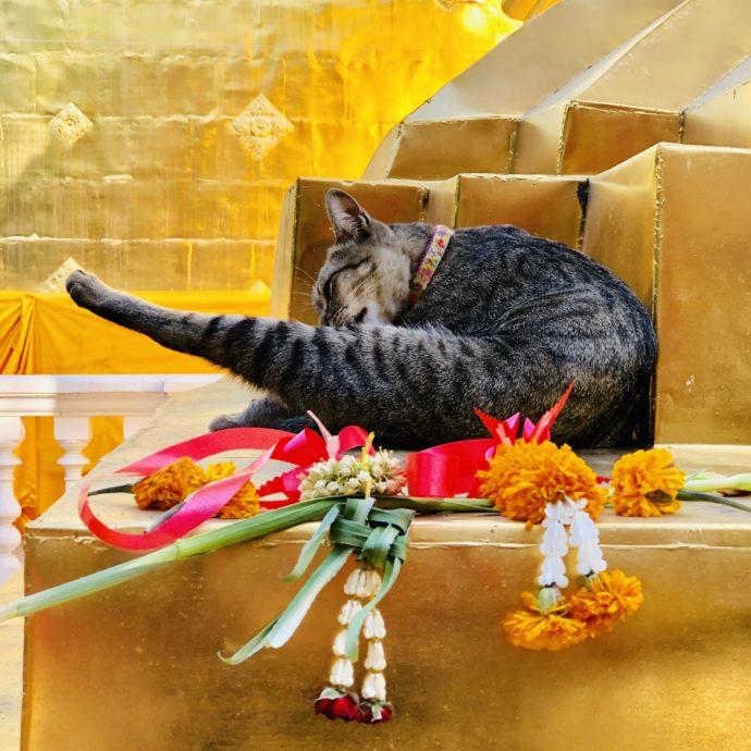 仏塔で毛づくろいする猫