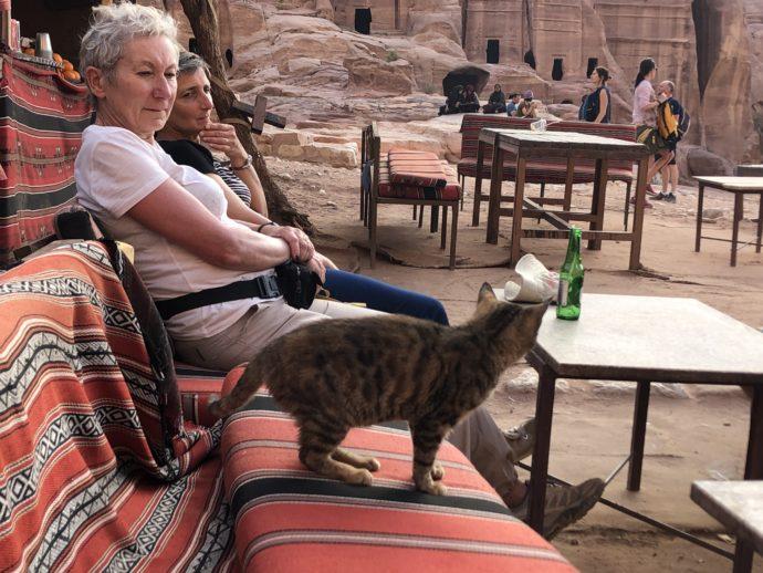 休憩所の看板猫