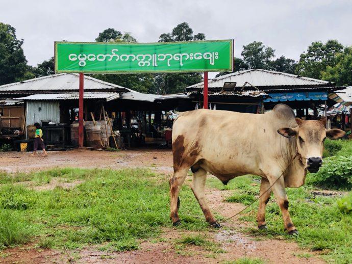 水牛とマーケット