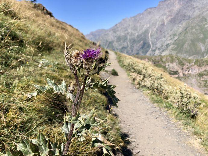 花が咲くトレッキングルート