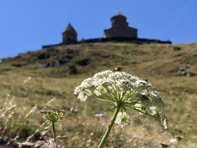 野花とミツバチ