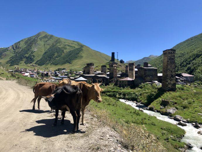 ウシュグリ村を歩く牛の群れ