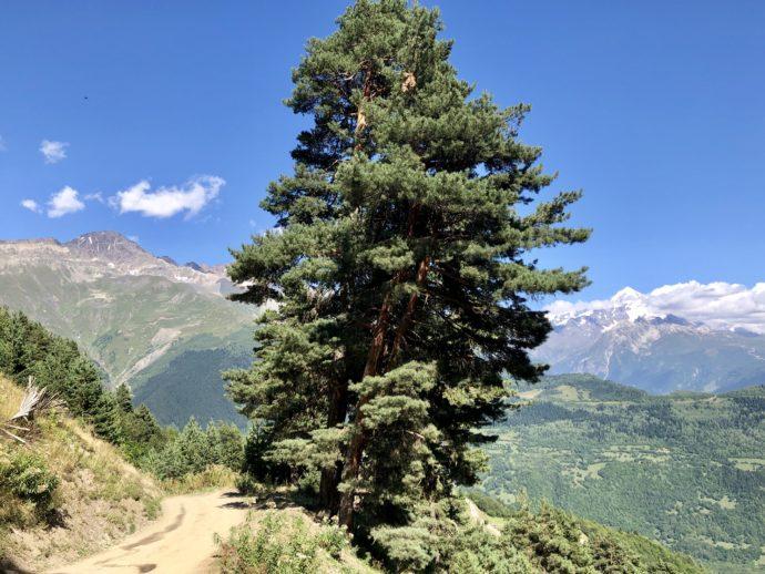 大木と絶景