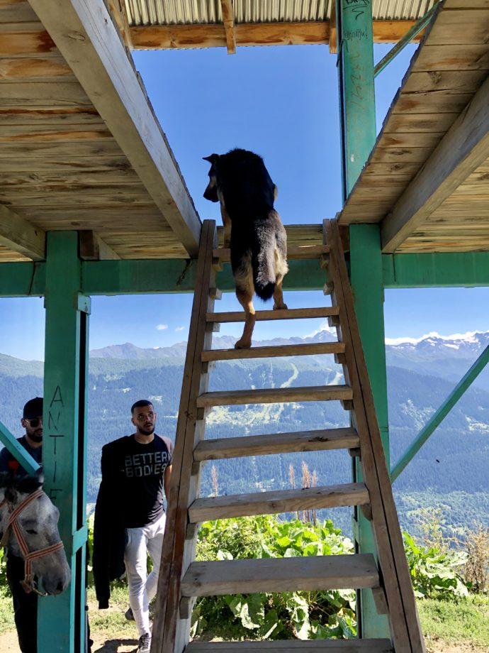 見晴台で人払いをする番犬