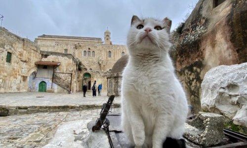 エルサレムの猫