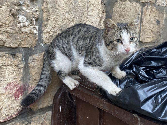 ゴミ箱を漁る猫