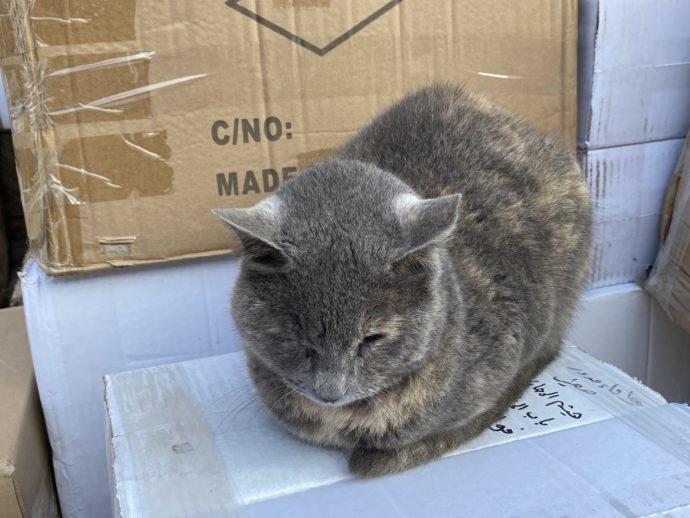 寒くて丸まる猫