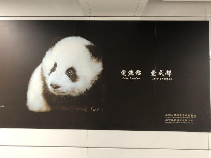パンダ広告