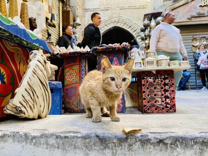 ハーン・ハリーリで会った猫