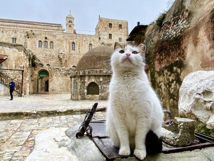 エルサレム旧市街の猫