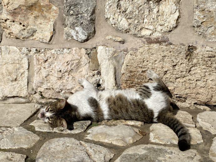 石畳の上でくつろぐ猫