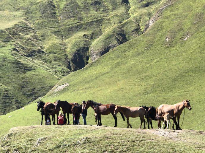 ウシュグリの馬たち
