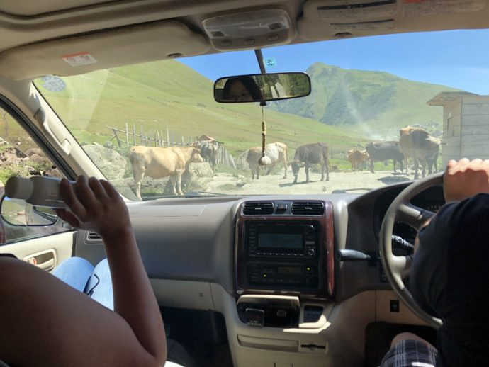 道を塞ぐ牛たち