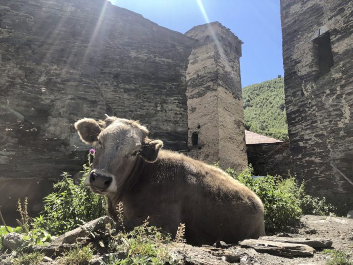 くつろぐ牛