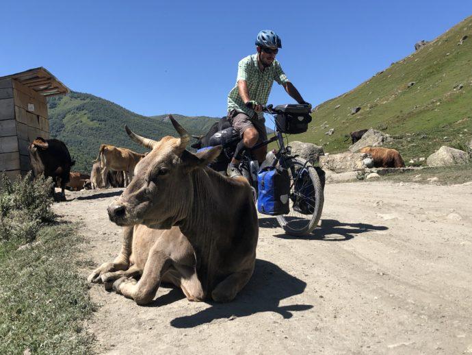 牛と自転車に乗る男性