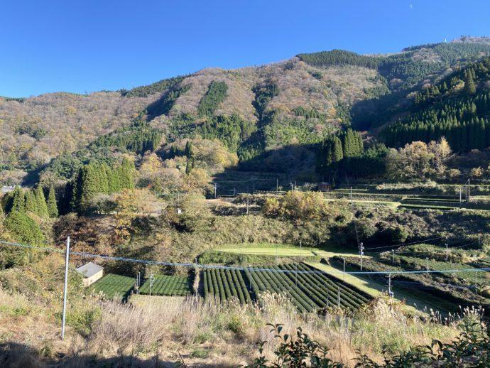 丸小野地区の茶園と青空