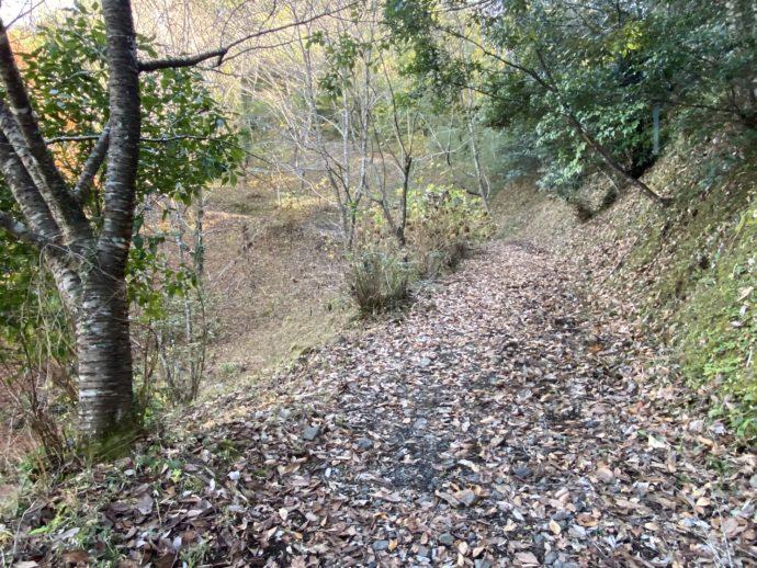 葉っぱが落ちている道