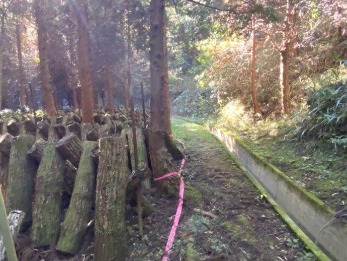 伐採後の木とオルレコース