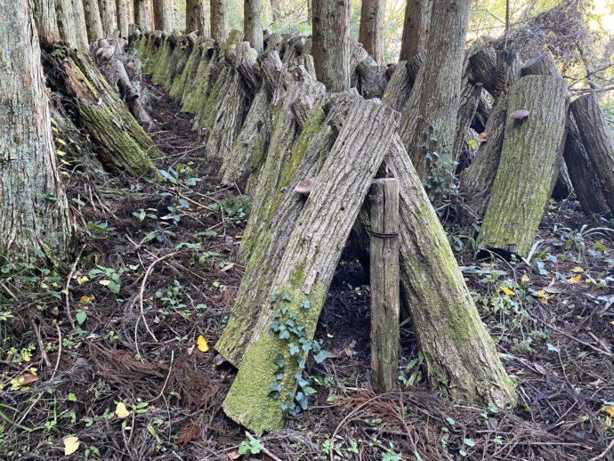 薪ようの木