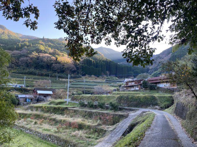 丸小野地区の茶園と道