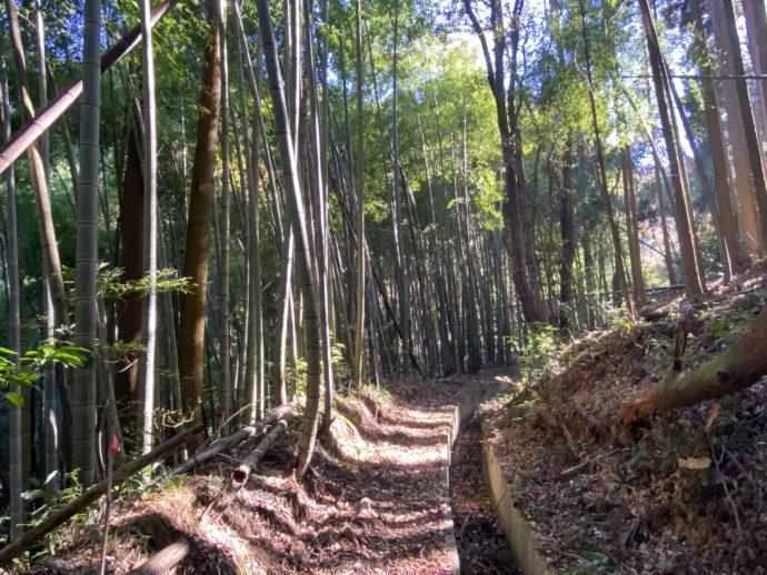 木漏れ日の漏れる林