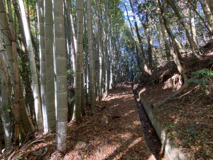 竹やぶのなかの道