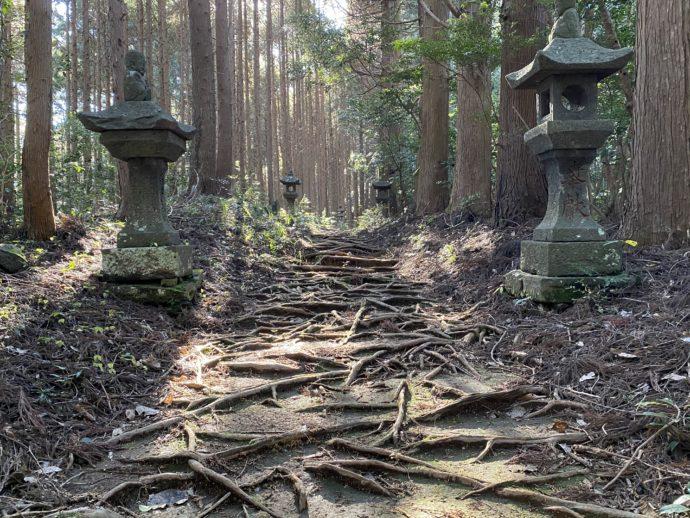 向山神社の参道と根っこ