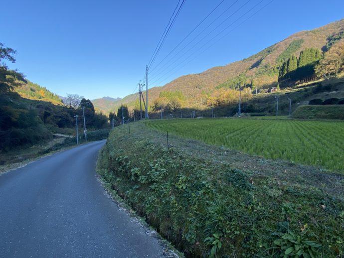 茶畑と青空と道
