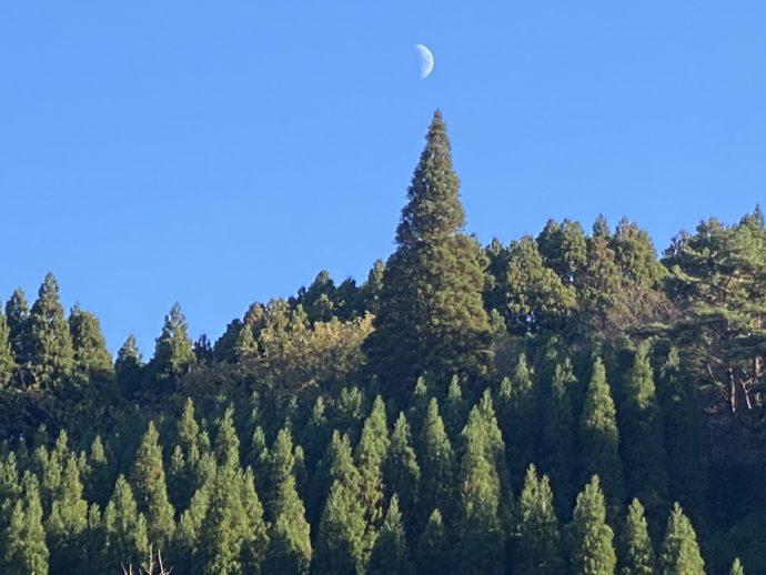 月と青空と樹