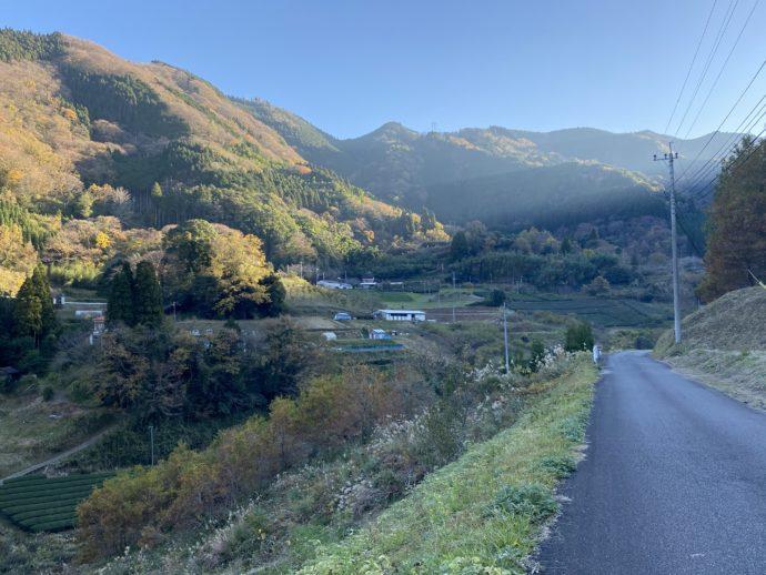 茶園周辺の道