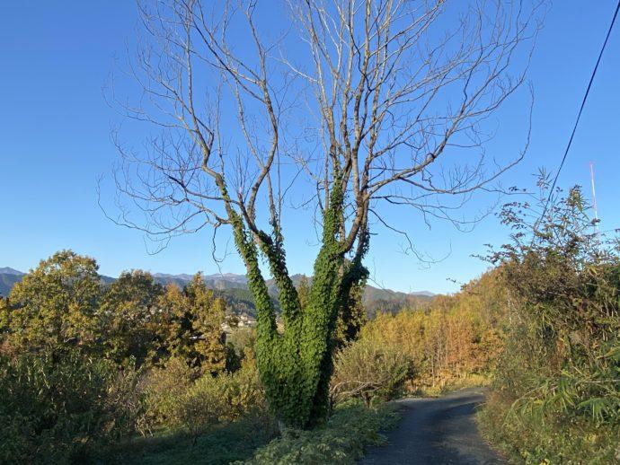 葉っぱがつたう木